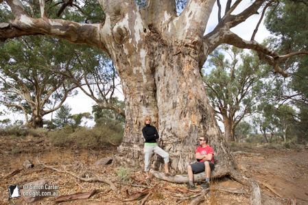 After a few days it rained which was great to get a much needed rest day and a chance to go exploring in the area. Here's Burke and Wills... oops, Suzy and Rob and a big tree.